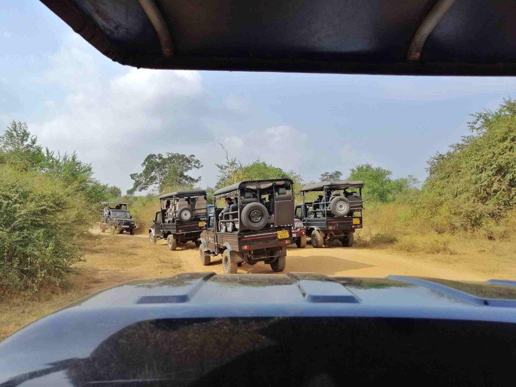 immagine di tante jeep che corrono all'interno di Yala Park