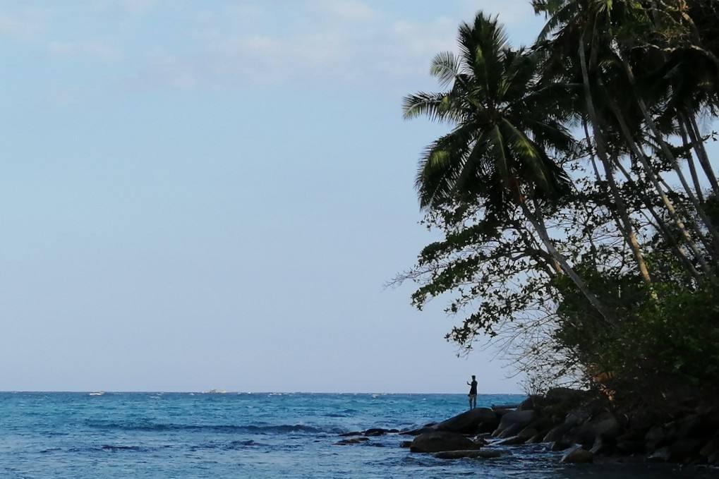 mare azzurro cielo celeste e palme verdi in spiaggia Sri Lanka